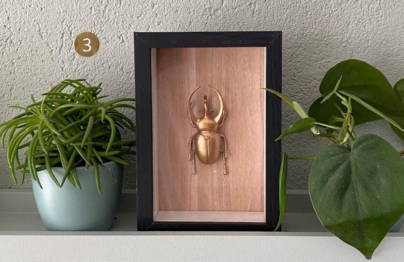 Lumbuck robuuste houten decoratie landelijk wonen stoer interieur gouden kever in lijst van hout zwart